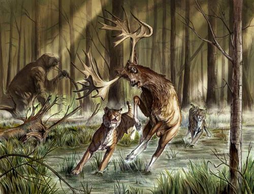Giants of the North American Savannas. An article that summarizes the mega fauna that lived in North America during the Pleistocene (about 2,588,000 to 11,700 years ago). Image is an Artist's rendition of a Stag Moose being hunted by saber-toothed cats.