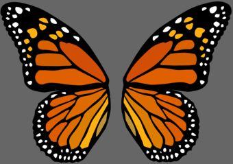 Monarch butterfly wings - photo#19