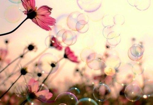 bubbles, colorful, flores, flowers