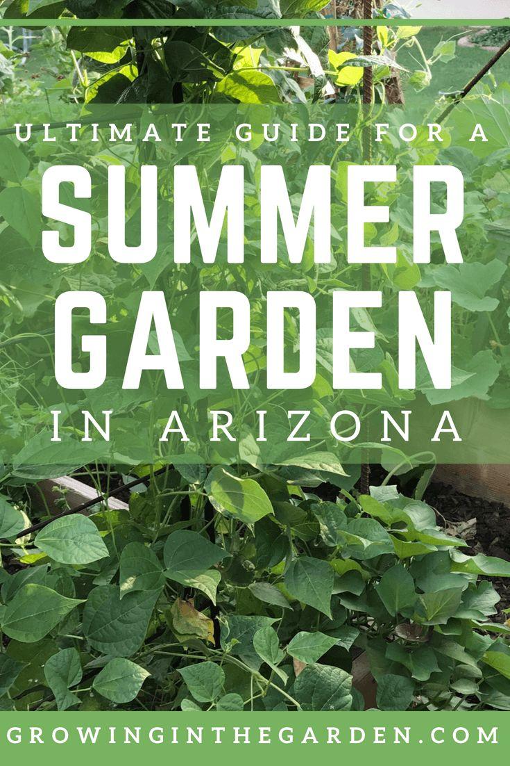 Summer Gardening in Arizona – Arizona