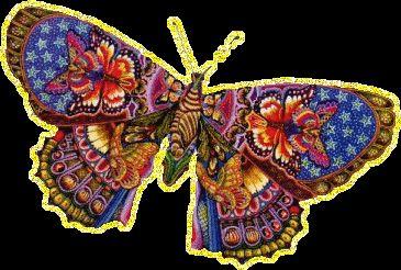Колекція метеликів.