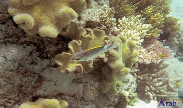 Coral reefs in hot water: study