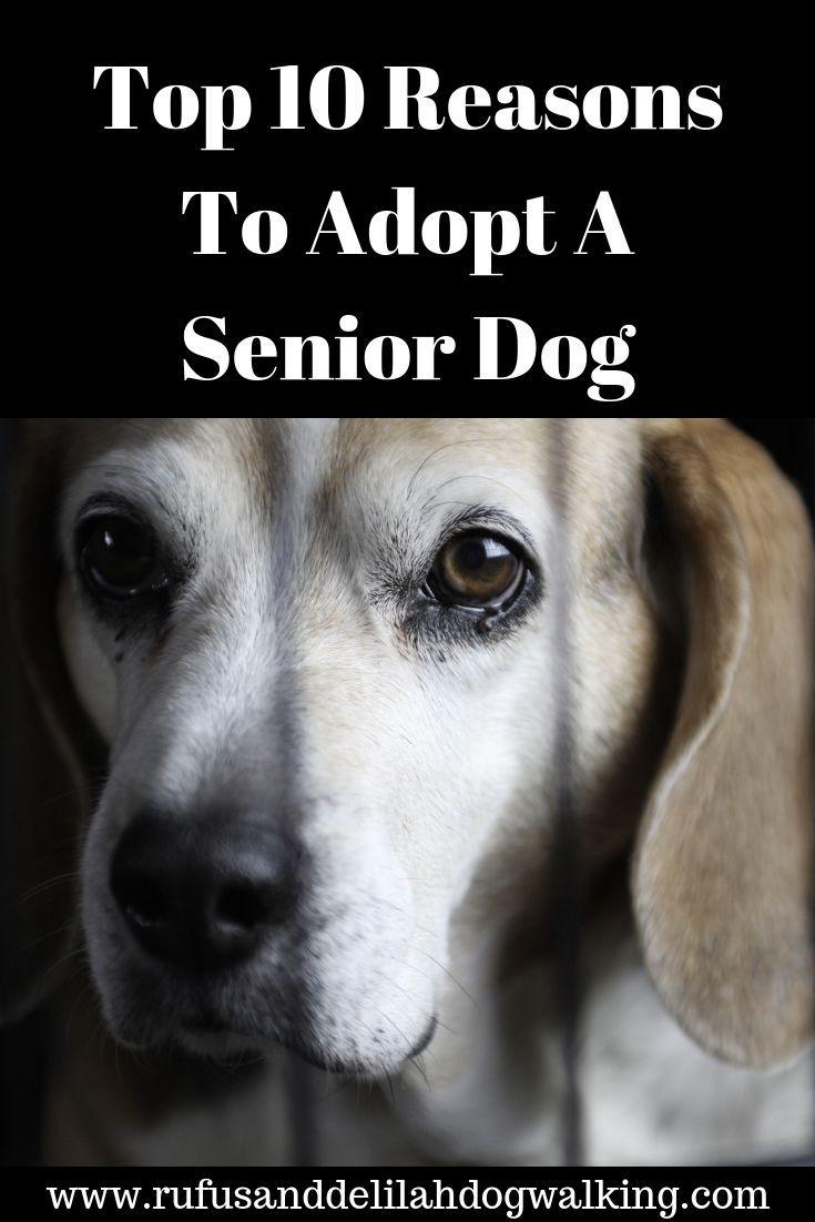 Meghan Adopt A Pet Pets Adoption Dog Love