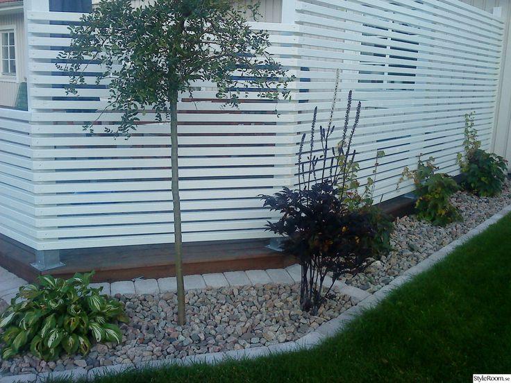 skärmvägg,växter