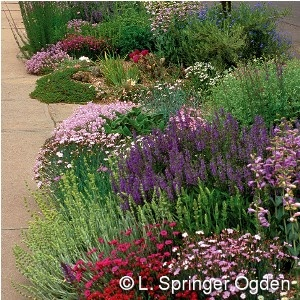 Soft colors inferno strip garden perennials for hot for Narrow flower bed ideas