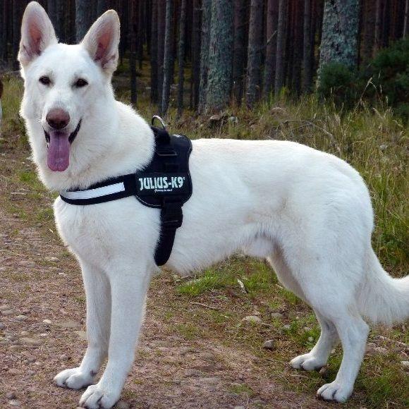 New Dog Walking Harness