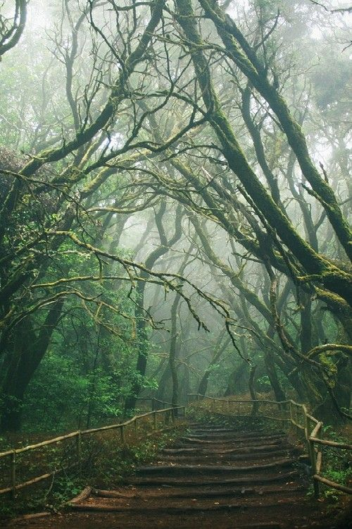 Forests, Paths, Wood, Nature, Canary Islands, Foggy Forest, Trees, Pathways, Places
