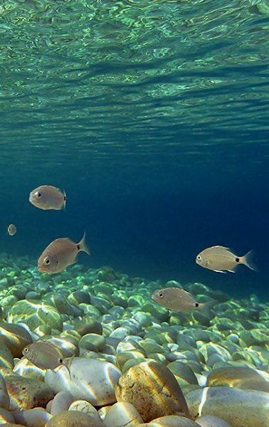 Kipiadi beach underwater.. Paxos Island (Ionian), Greece // Copyright © Marios Katsaros Photography