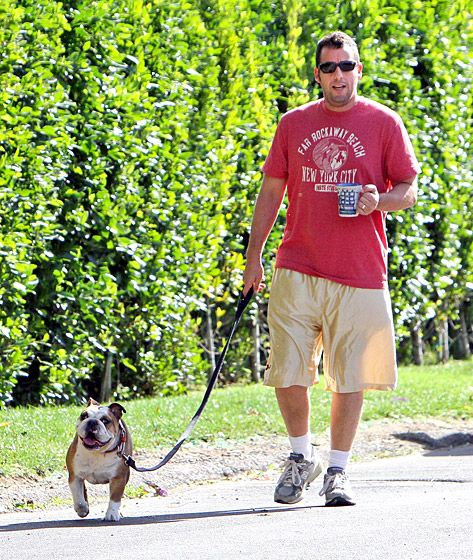 Adam Sandler After his bulldog and the best man at his wedding, Meatball, passed away in 2004, the comedian got his lovable friend, Matzoball.   Read more: http://www.usmagazine.com/celebrity-news/pictures/celebs-with-their-pets-20131211/33840#ixzz2kiDq5PsV  Follow us: @Us Weekly on Twitter | usweekly on Facebook