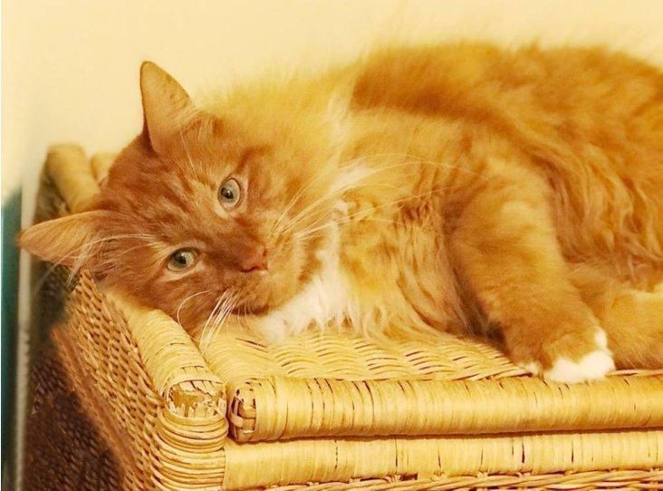 Edward Find A Pet Rspca Org Uk Ginger Cats Cats Pets