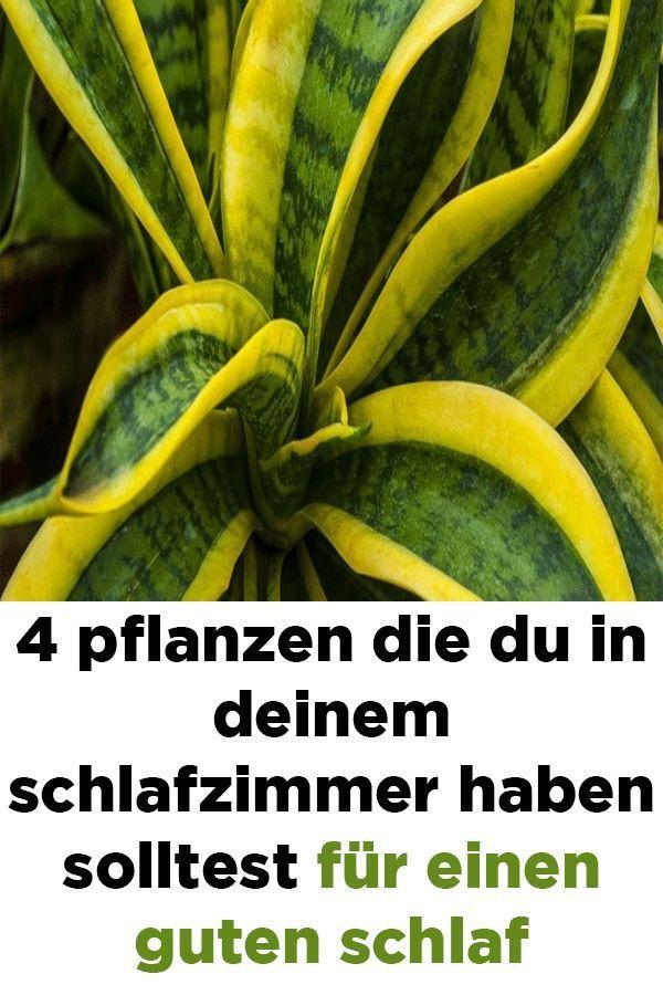 4 Pflanzen Die Du In Deinem Schlafzimmer Haben Solltest Fur Einen Guten Schlaf Deinem Einen Guten Haben Pfl Schlafzimmer Pflanzen Gute Nachtruhe Pflanzen