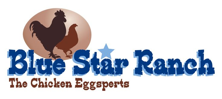 Blue Star Ranch in Bellville, Texas is the place for chickens for sale in Texas; for laying hens; chicks, hens, and pullets for sale in Texas.  They sale all breeds all year round.
