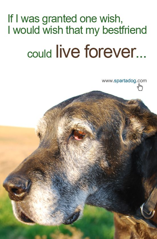 one wish. my dog could live forever!