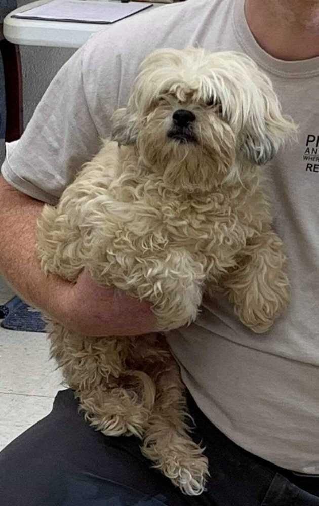 Adopt Tiny On Adoption Animal Rescue Pet Care