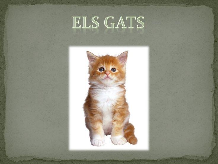 Els gats