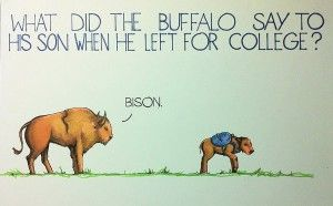 What did the buffalo say to his son when he left for college? via Dave, dailypicksandflicks.com:  'Bye, son.'  #Illustration #Humor #Buffalo #dailypicksandflicks