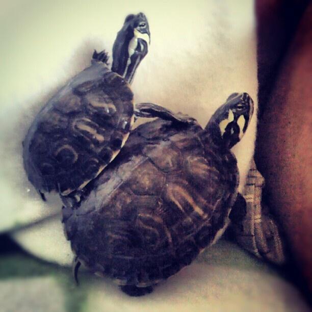 "@tczpeti's photo: ""Terepgyakorlat"" #instagram"