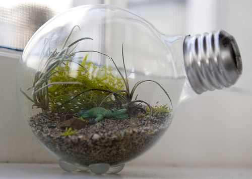Here's the how-to on the mini lightbulb terrariums.
