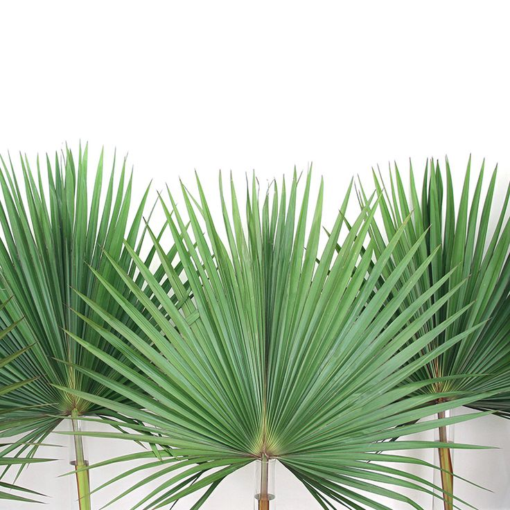 Palm frons @S. C. Studio NYC