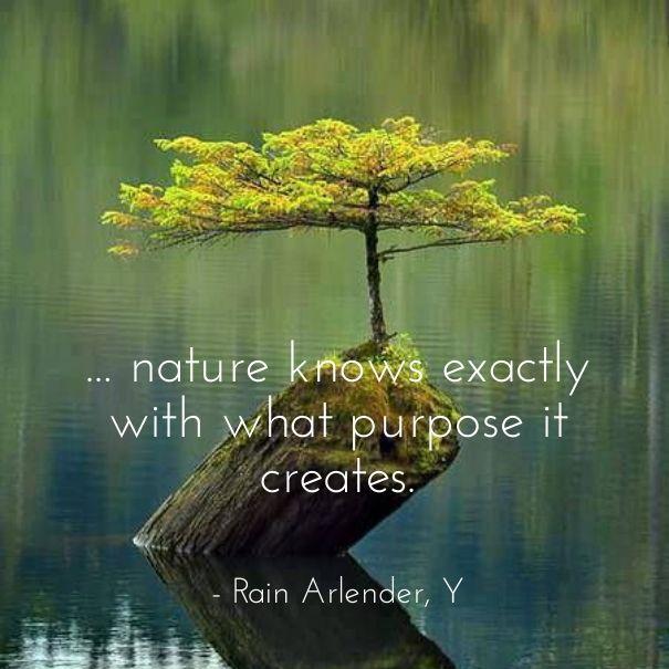 Nature clean healthy organic sustainable living ebook quote kindle Y Rain Arlender http://www.amazon.com/Y-Rain-Nature Arlender-ebook/dp/B00LPMOOP4/ref=sr_1_1?ie=UTF8&qid=1453471035&sr=8-1&keywords=y+rain