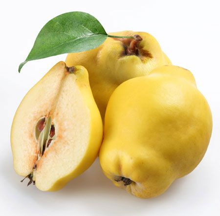 The 7 Best Fruits to Eat All Winter: The 7 Best Fruits to Eat All Winter: Quinces http://www.rodalenews.com/7-best-winter-fruits-protecting-your-heart?page=3