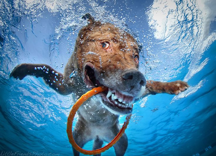 Happy dogs playing under water by Seth Casteel