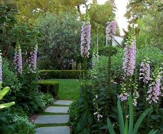 Garden Alert: 22 Plants to Keep Away From Pets!! Foxglove (pic),English Ivy,Garden Dahlia, the bulbs of Tulips & Daffodils, Cyclamens,Coleus,Hellebores,Chrysanthemums,Azaleas,Autumn Crocus,Amarylis,Hydrangeas,Asatic Hybrid lillies (tiger etc), Day Lillies, Oleanders, Yew, Sweet Peas and houseplants,Peace Lily, Pothos,Sago Palm,Umbrella Tree