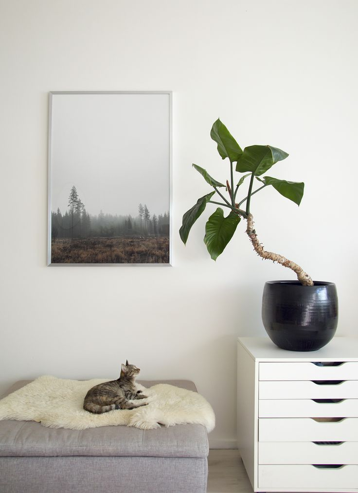 Bedroom Plant (and Kitty).