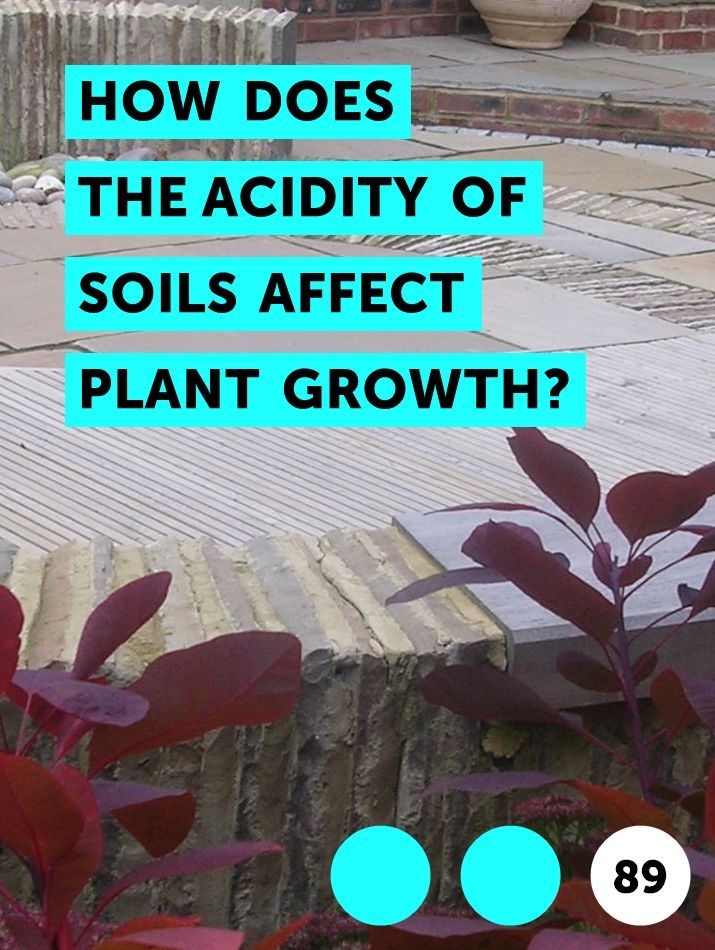 How Does Ph Affect Plant Growth And Gardeners Gardens