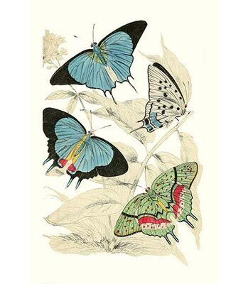 Buyenlarge European Butterflies And Moths By James Duncan Painting Print Size 36 H X 24 W X 1 5 Butterfly Painting Vintage Butterfly Print Butterfly Art