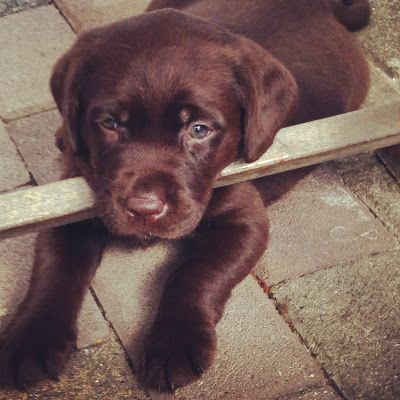 Our dog Luna...Love!