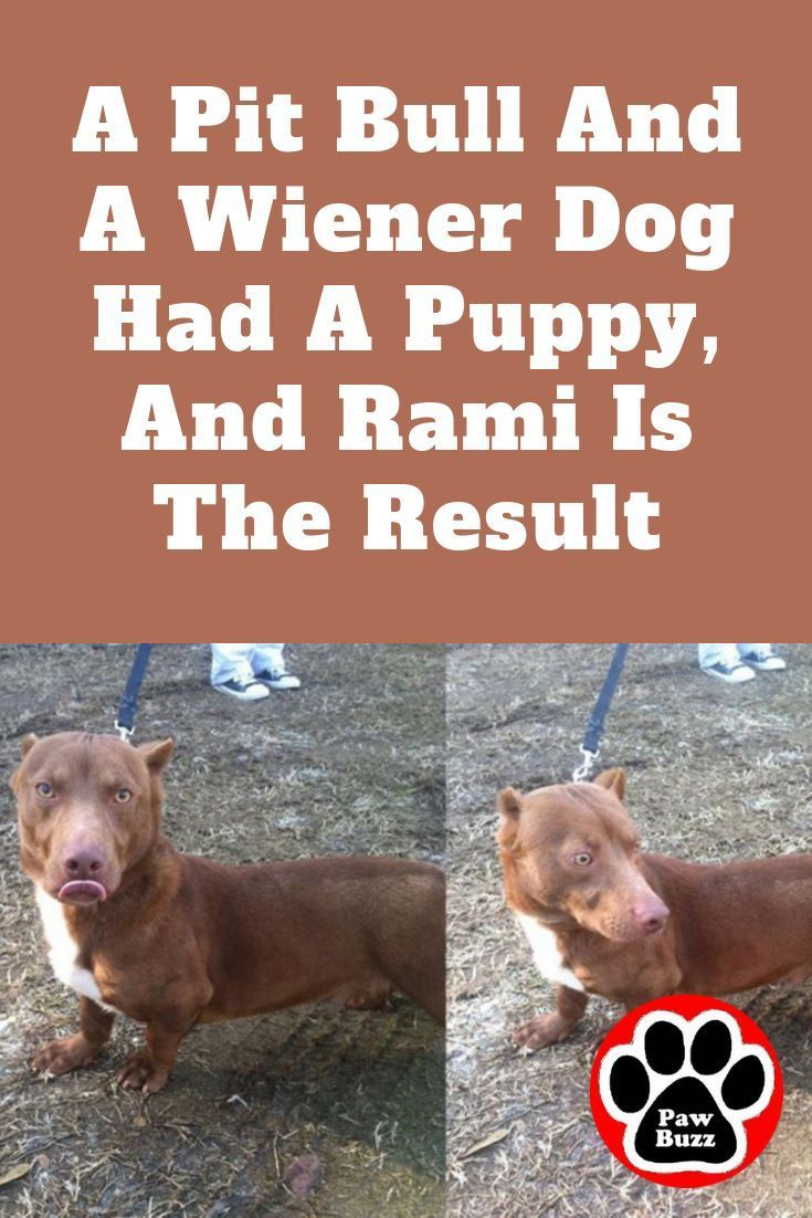 Happy Wiener Dog Wednesday In 2020 Dachshund Puppy Miniature Weenie Dogs Dachshund Dog