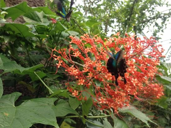 Photo of Bali Butterfly Park
