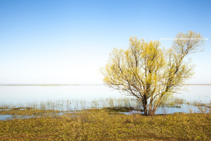Victoria, Entre Ríos, Argentina. #lonely #tree #nature #quiet #peace - www.flaviamorlachetti.com