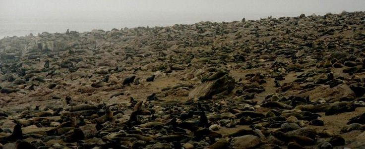 Cape Cross, Namibia Africa - Best Place In The World To Visit Seals