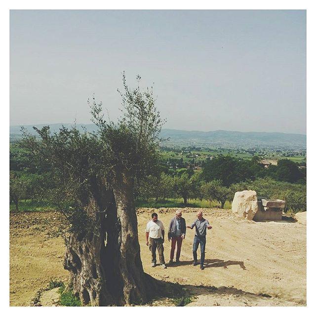 Explanations on site // #siteinspection #construction #landarch #landscapearchitecture #tree #olive #trunk #architecture #italy #italia #landscape #farmland #stone 📷@guido_pnt