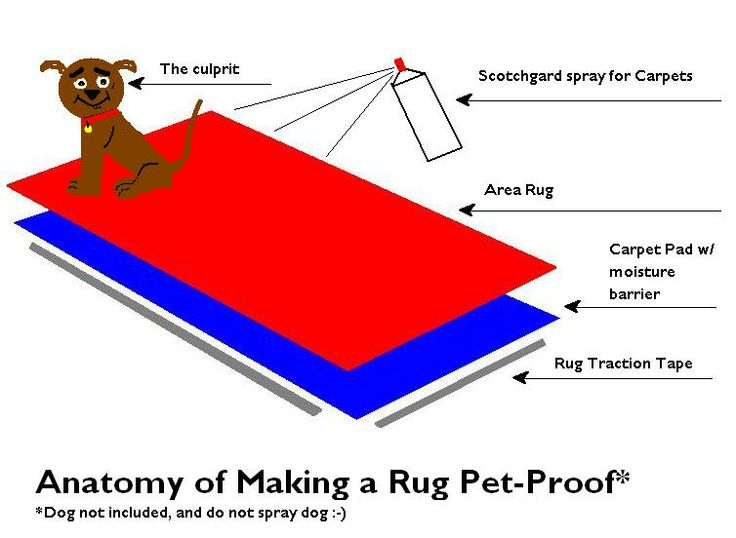 9 Best Images About Pet Proof Rugs On Pinterest Carpets