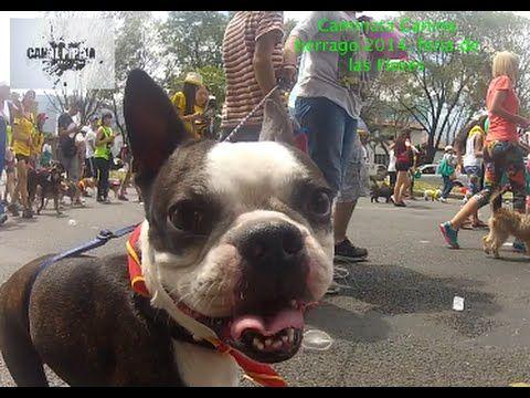 Caminata Canina Feria de Flores 2014