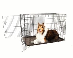 I love collies and I have to admit, this is one collie that is super cute! Make sure you read more about the crate that helps hold her in at http://newstoreview.com/comparing-the-carlson-secure-and-compact-to-the-merax-folding-dog-cage