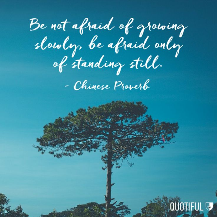"""Be not afraid of growing slowly, be afraid only of standing still."" - Chinese Proverb"