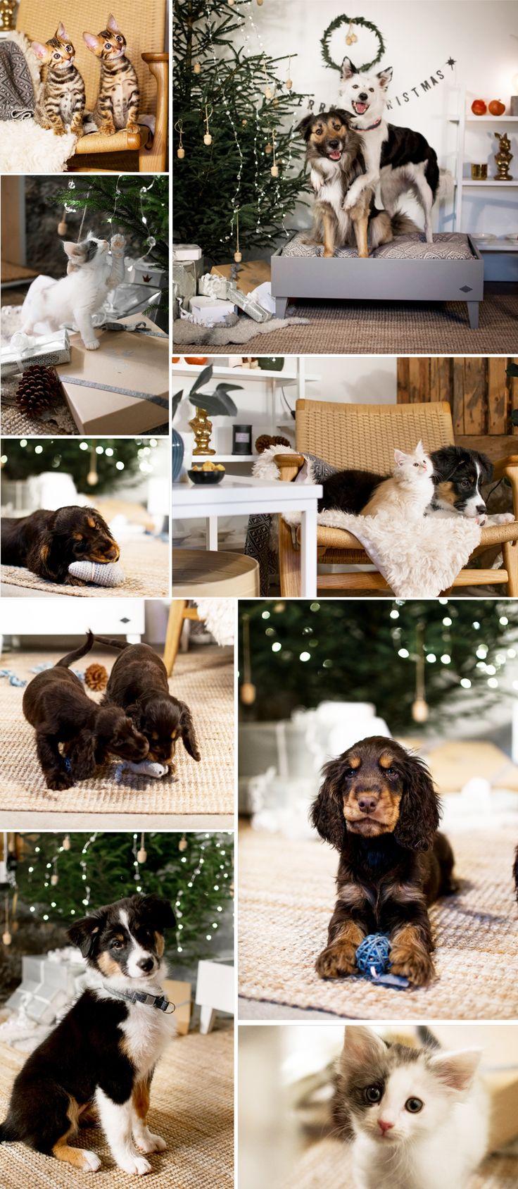 Skandinavisk design till katt och hund. Jul. Cockerspaniel. Hundsäng. Kattbädd. Norsk Skogskatt. Kattungar. Hundvalp.