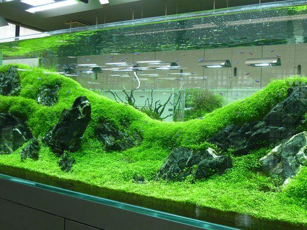 Planted Freshwater Aquarium Really Fine Carpet Rolling