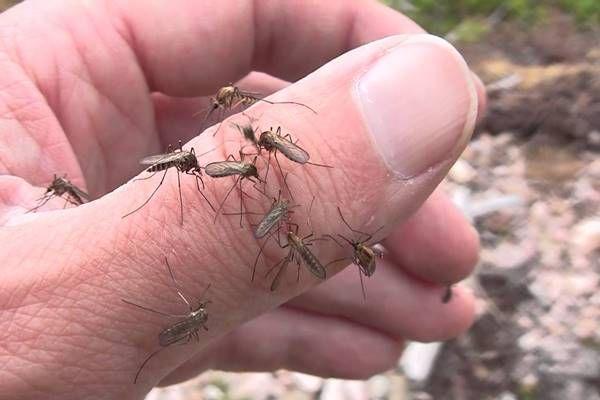szúnyogok ellen házilag