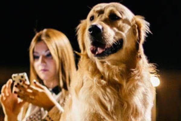Bultos De Grasa En Perros Son Motivo De Alarma Vets Clinics