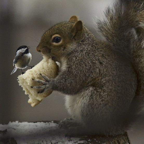 chickadee and squirrel - can't be a real picture, but it's super cute
