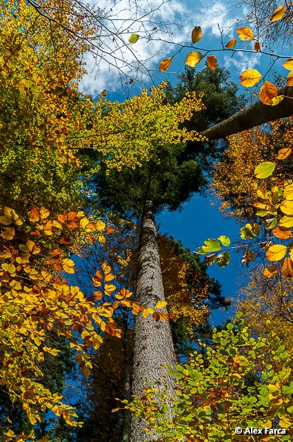 Toamna in Bucegi, Sinaia, #Romania Autumn in Bucegi mountains, Sinaia, #Romania