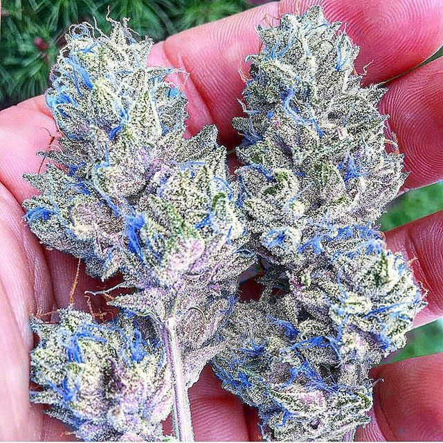 Buy Marijuana/ Buy weed /Buy cannabis and marijuana products.You have been thinking of  where to get the oldest and the best marijuana strains as well as concentrates and edibles, and place your order to get in shipped within 48 hours max.No Card needed.Every transaction  with us is discreet .More info at.. www.onlinecannabissupply.com Text or call +1(951) 534 5163
