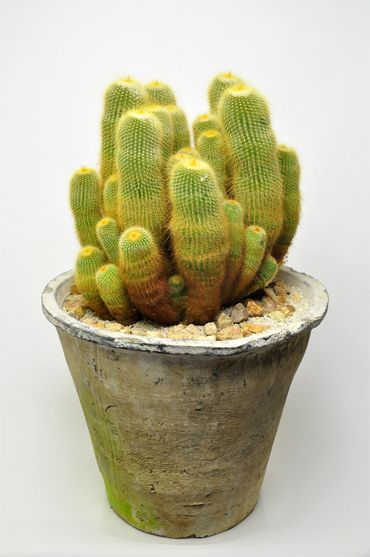 17 Best Images About Small Succulent And Cactus Containers 400 x 300