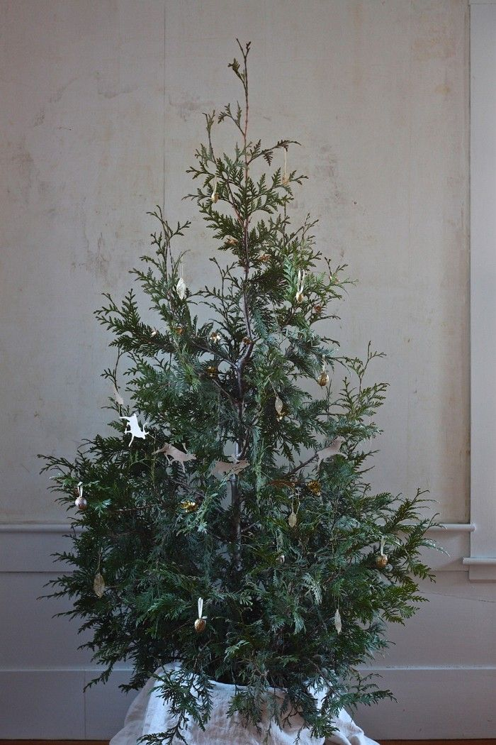 DIY Living Christmas Tree - plant in your yard after the holidays - Remodelista