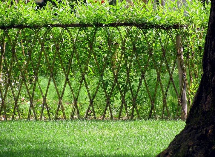 Living Willow Hedges, or 'fedges' = fence + hedge. Willows, sallows, and osiers form the genus Salix (Latin for willow), which consist of around 400 species of deciduous trees and shrubs. Willow are native to moist soils in cold and temperate regions of the Northern Hemisphere. Almost all willows take root very readily from cuttings. Young, thin willow cuttings are known as withies, longer willow rods are known as whips.